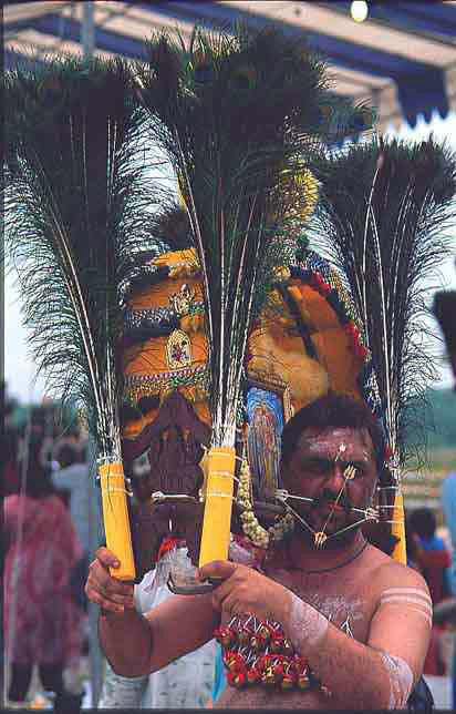 A devotee, Karpal Singh, carrying the traditional kavati on Punguni Uttiram